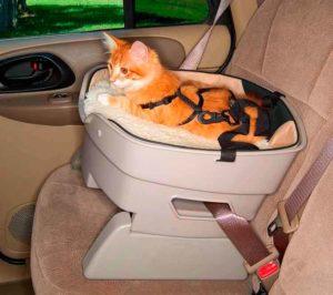 Como transportar seu PET com segurança em uma viajem 3