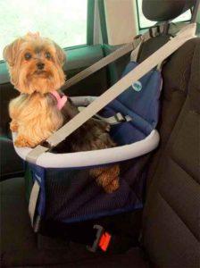 Como transportar seu PET com segurança em uma viajem 1